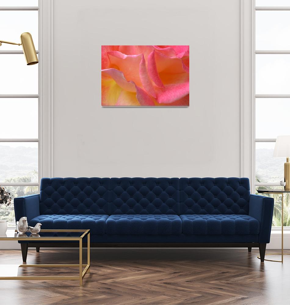 """""Hot Pink Yellow Rose 4"" #8070513""  (2013) by achimkrasenbrinkart"