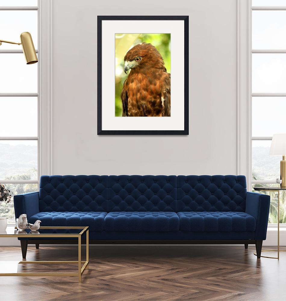"""""""Red Tailed Hawk""""  (2009) by rayjacque"""