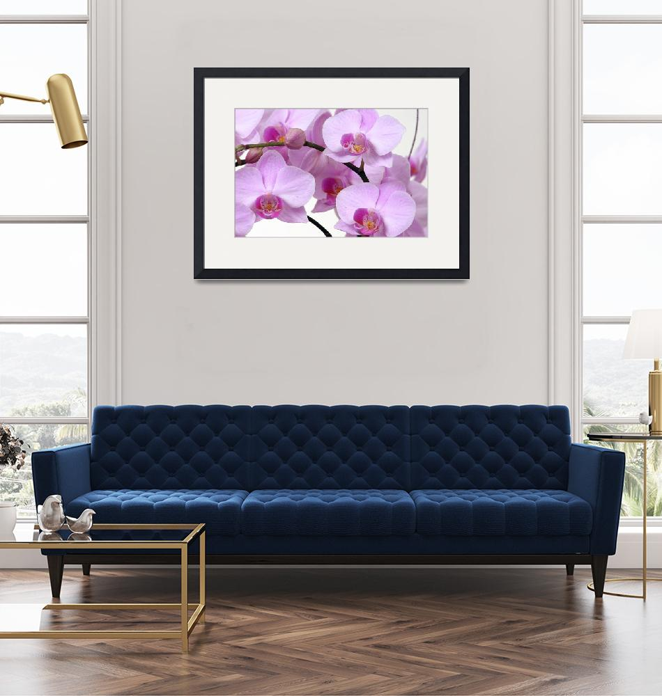 """""""Orchids""""  by urbanmythx"""