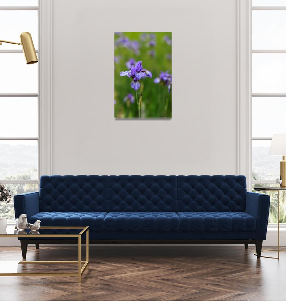 """Gradina Botanica""  by cristianbortes"
