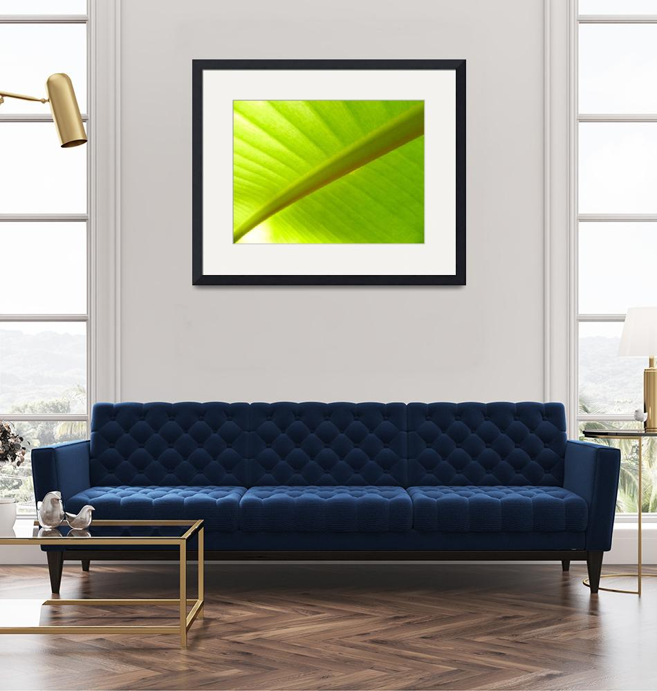 """""""Banana Leaf""""  (2018) by Surfmore"""