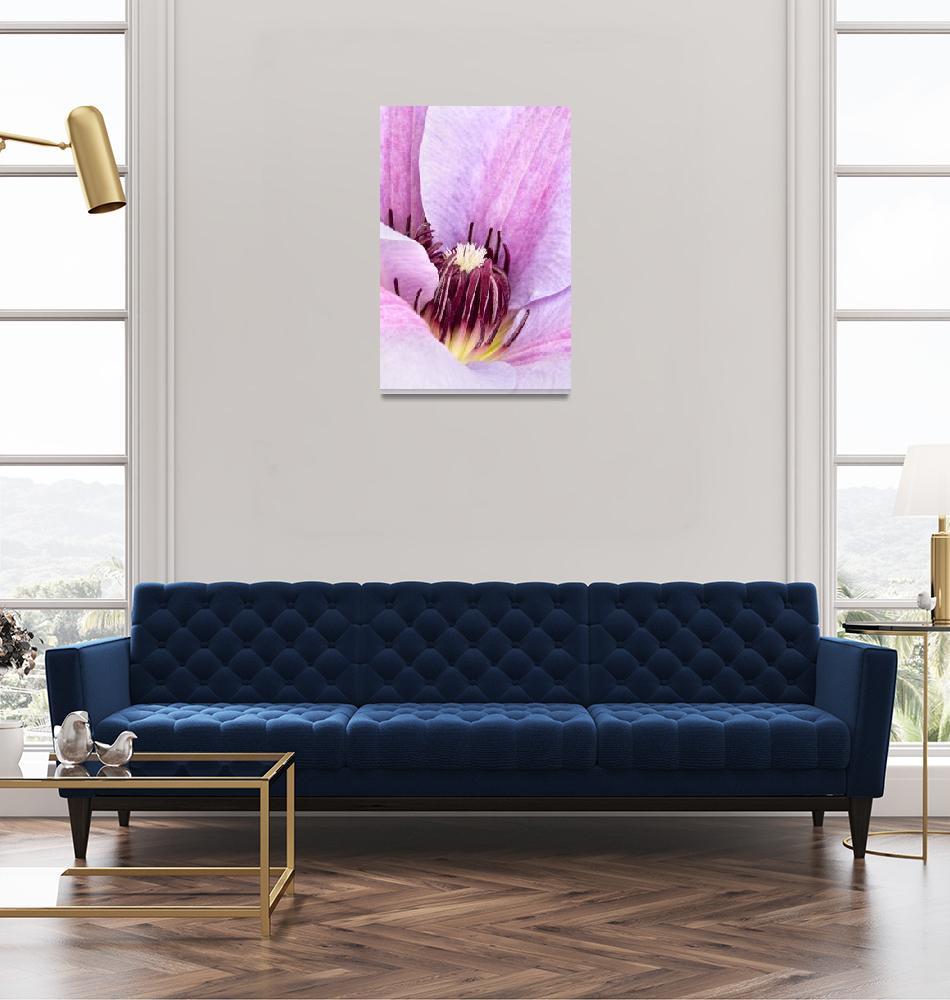 """Lilac Purple Clematis Print""  (2009) by NatalieKinnear"