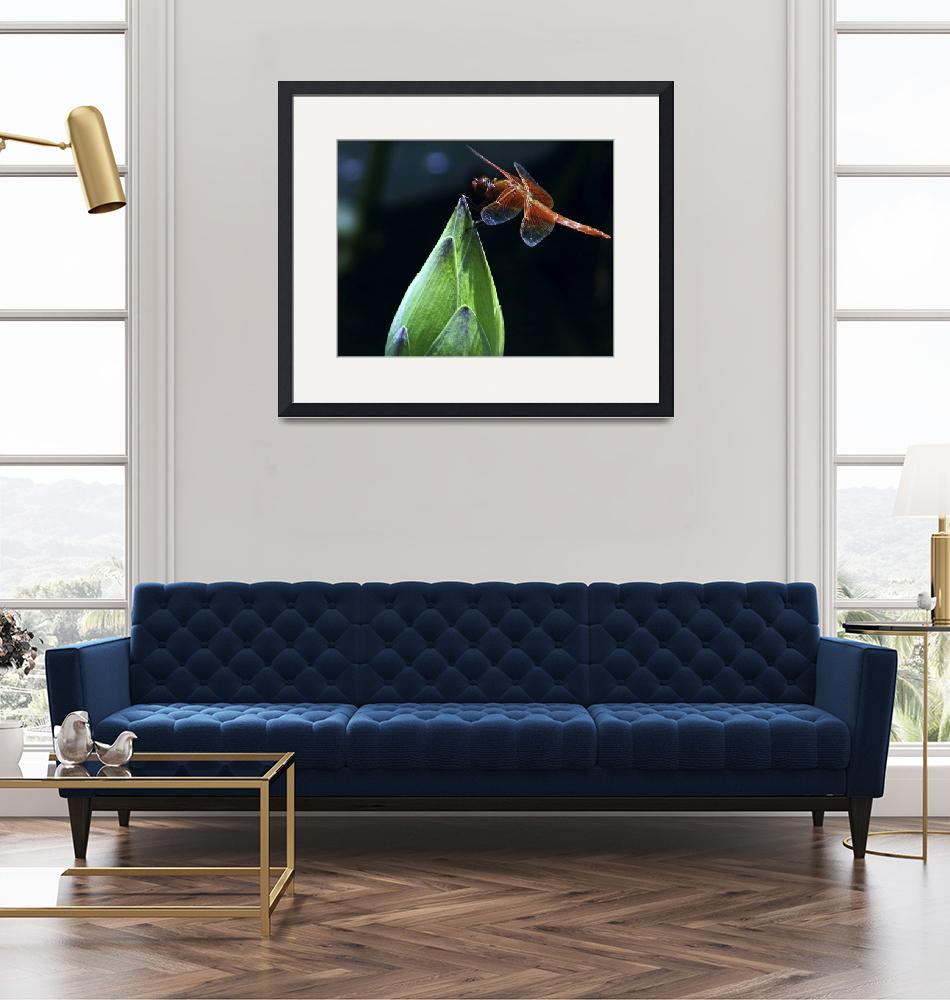 """""""Red Dragonfly on Lotus Bud""""  (2006) by johncorney"""