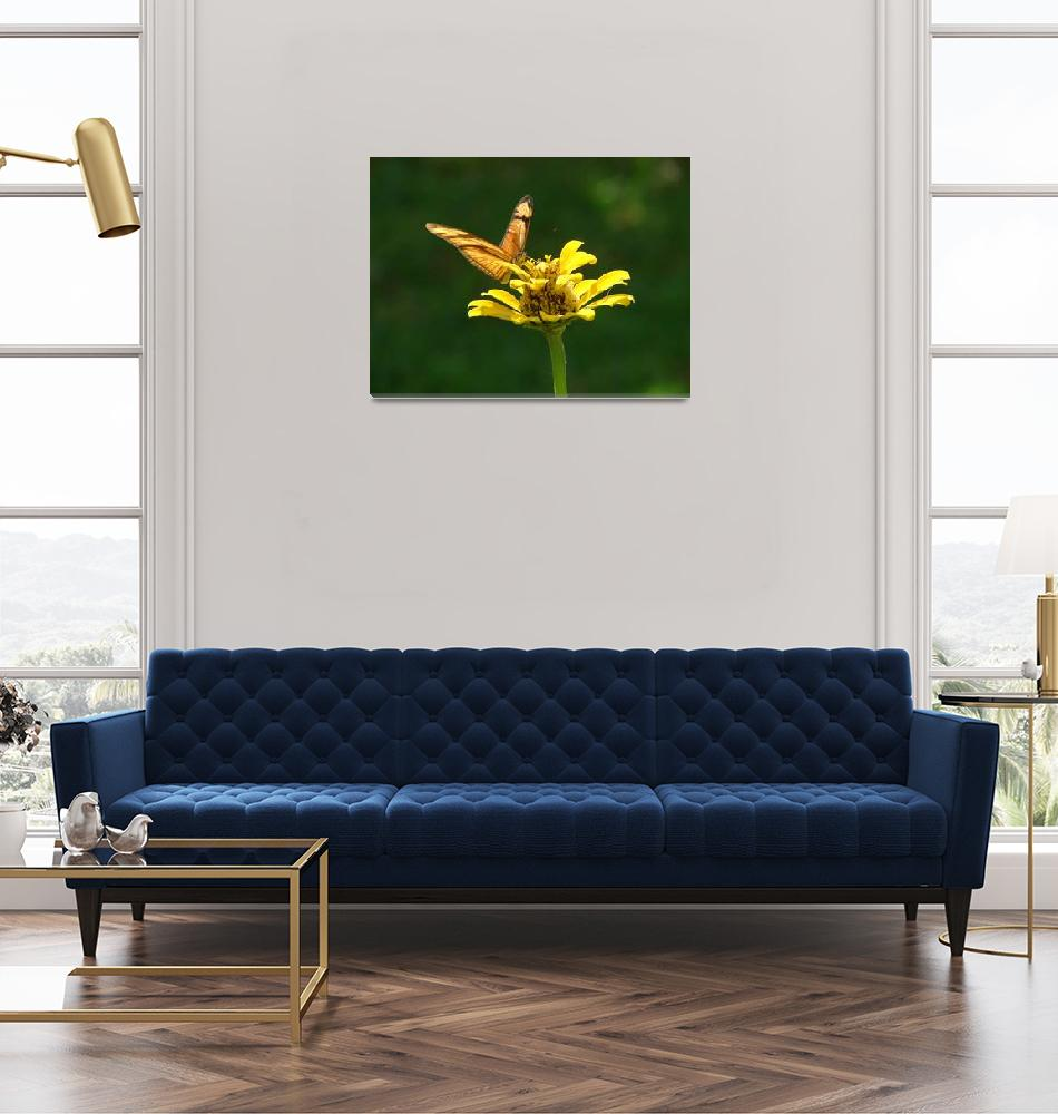 """""""Yellow Butterfly #2""""  (2007) by robvena"""