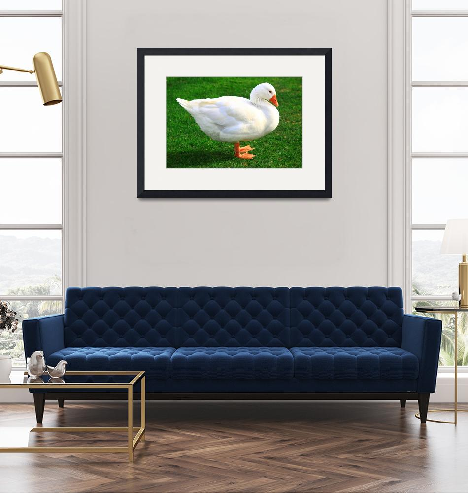 """white duck encanto park""  by charker"