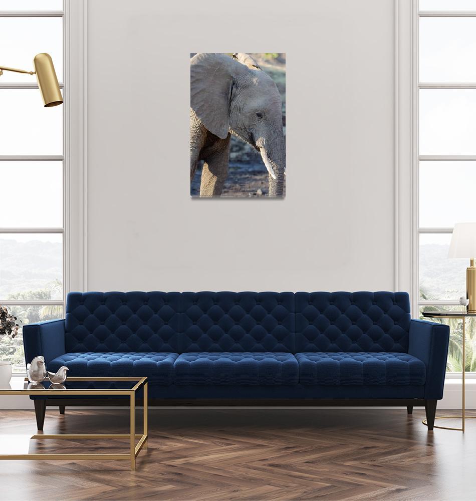 """Elephant with Tusks Profile""  (2019) by JPRVenturesLLC"