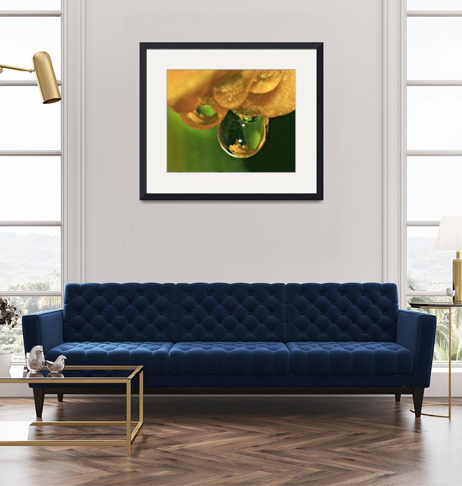 """""""Day Lily Water Drop 5""""  (2010) by SkeieScapes"""