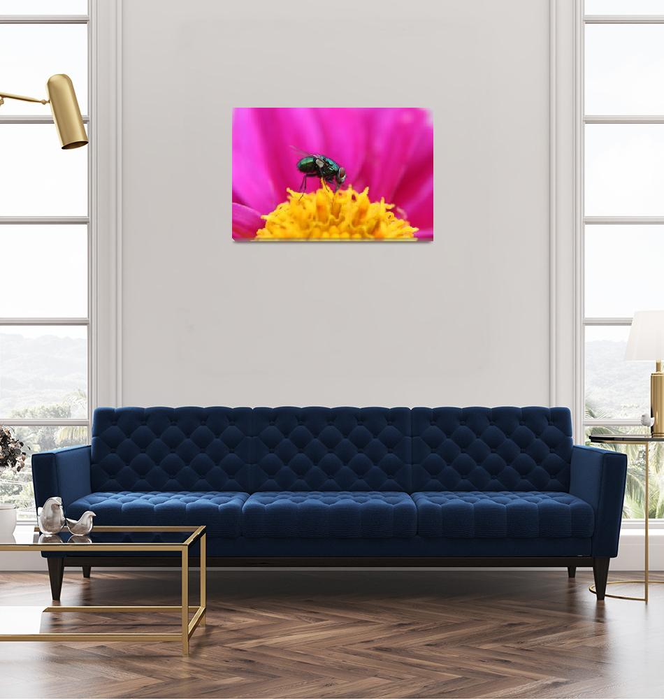 """Fly on a Purple Flower""  (2014) by rhamm"