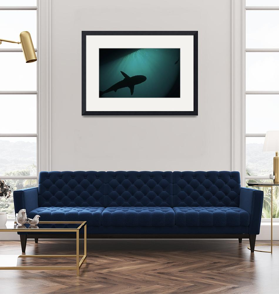 """""""shark under the boat""""  (2012) by Mac"""