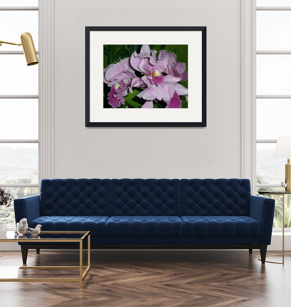 """""""pink orchids""""  (2008) by TanzilaShams"""