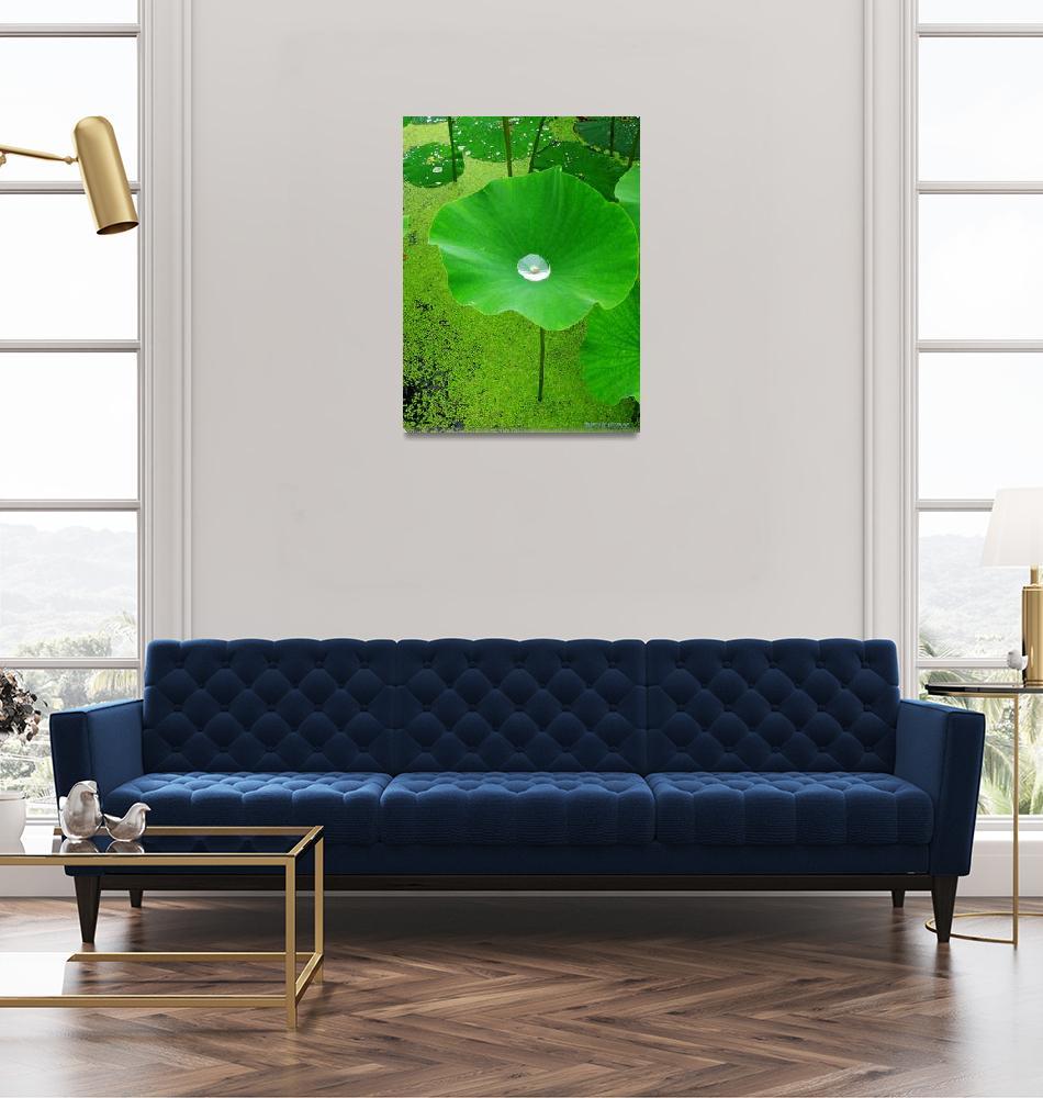 """Lotus Pond""  (2006) by garthglazier"