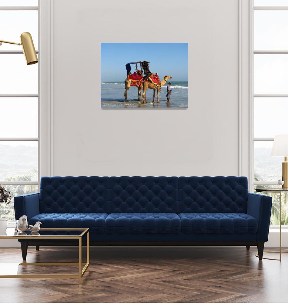 """Hawkesbay Beach Camels IMG_59312""  (2009) by davies"