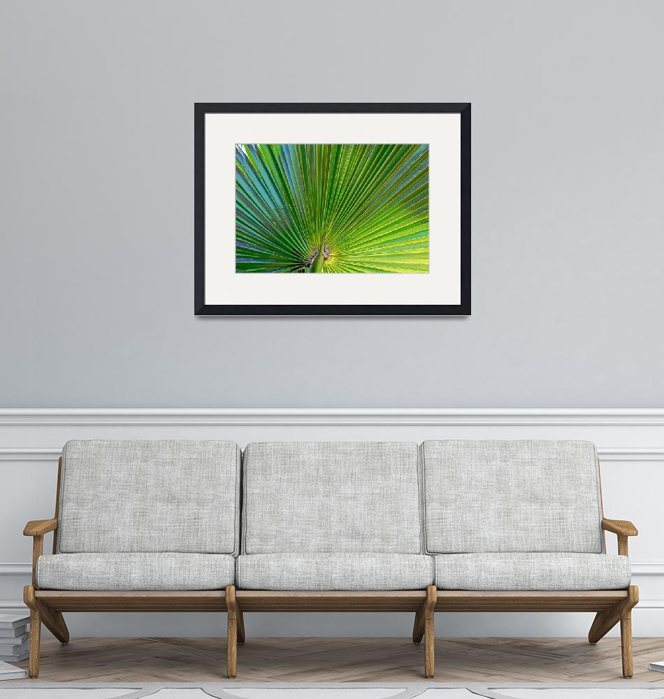 """""""Posterized Palm"""" (2008) by RichImages"""