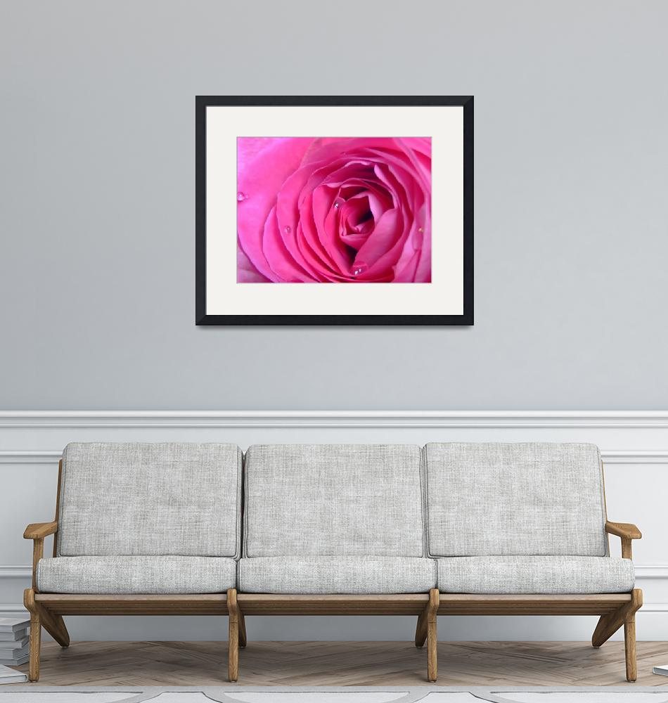 """Rose""  (2009) by Hartphotography"