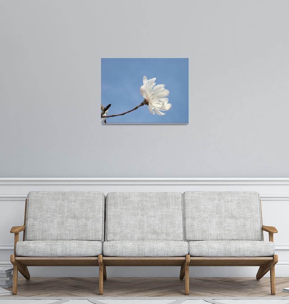 """Blue Sky Floral art White Magnolia Flower""  (2011) by BasleeTroutman"