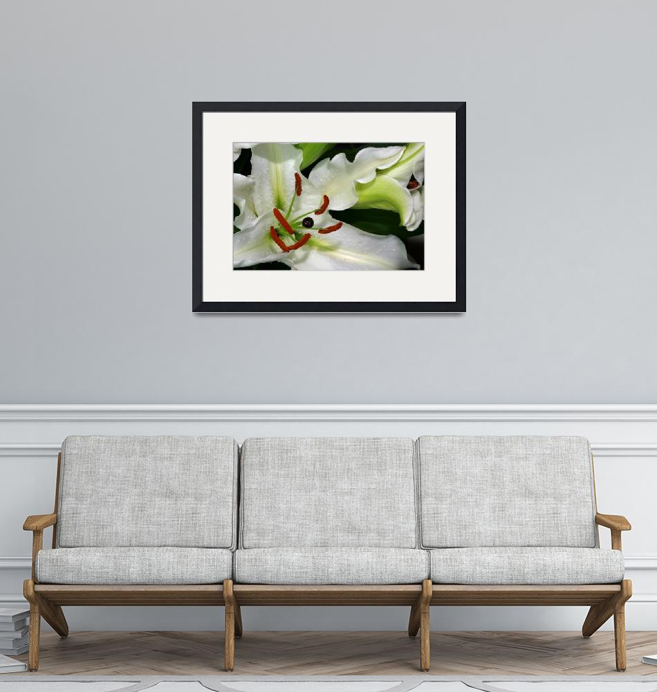 """""""White Lily"""" by Photo-Writer"""