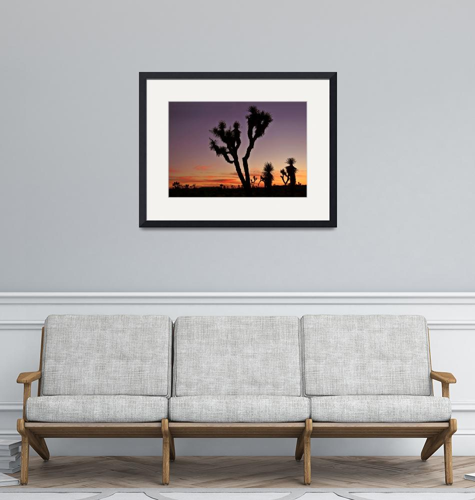 """Joshua Tree National Park"" by pbk"