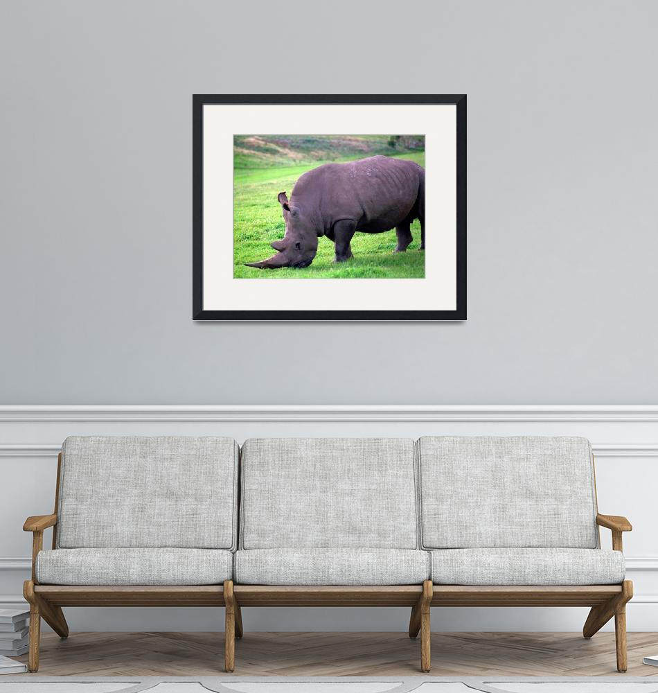 """""""Nap002a Rhino at Werribee Zoo""""  by nevilleprosser"""