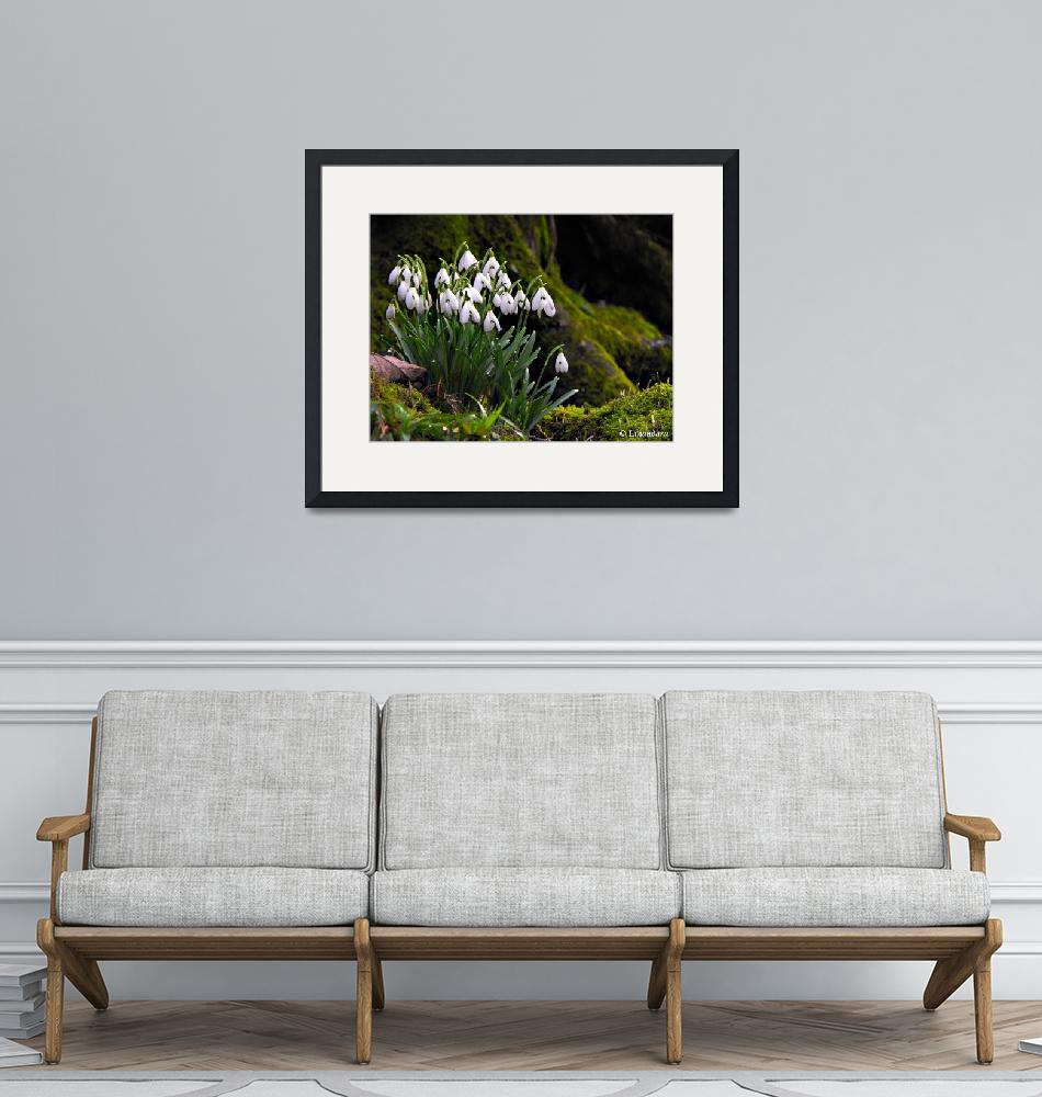 """""""Snowdrops by River Hafren""""  (2010) by Linandara"""
