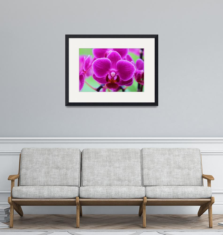 """""""Vibrant violet orchids on green background""""  (2017) by Bluejay36"""