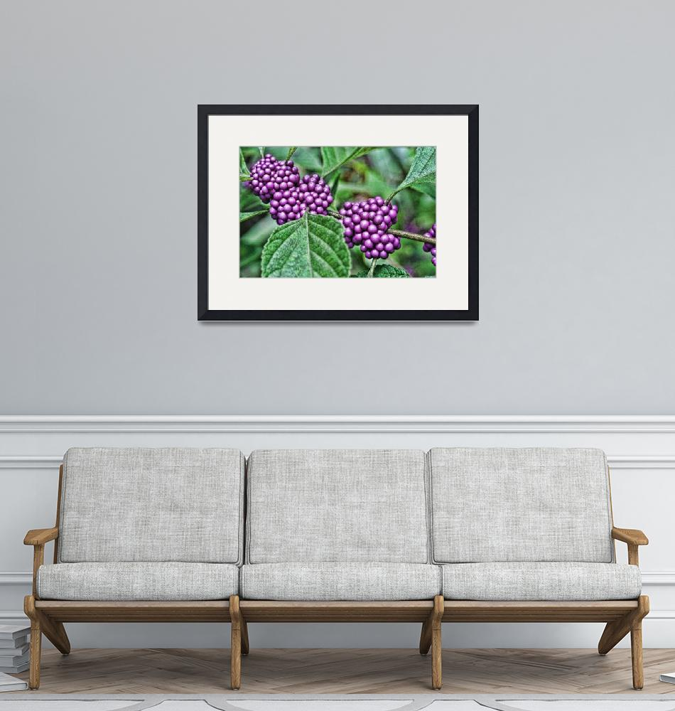 """""""American Beautyberry""""  (2009) by MarinaPhotography"""