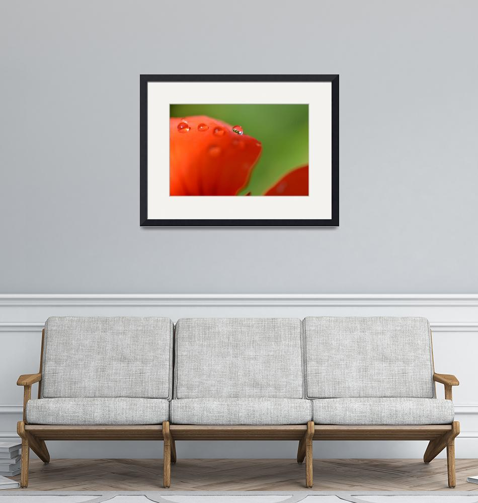 """Orange Nasturtium Dews""  (2011) by SamMirani"