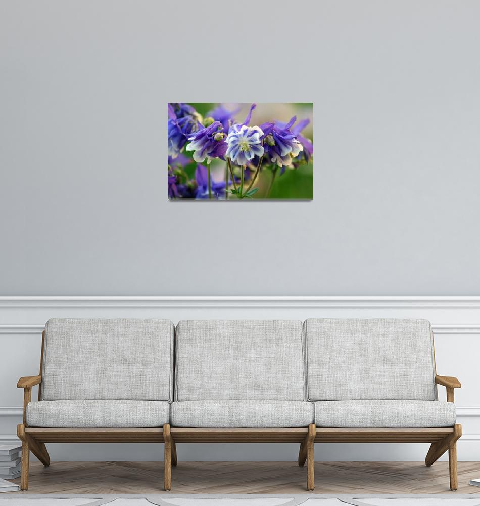 """Columbine Flowers""  (2012) by KsWorldArt"