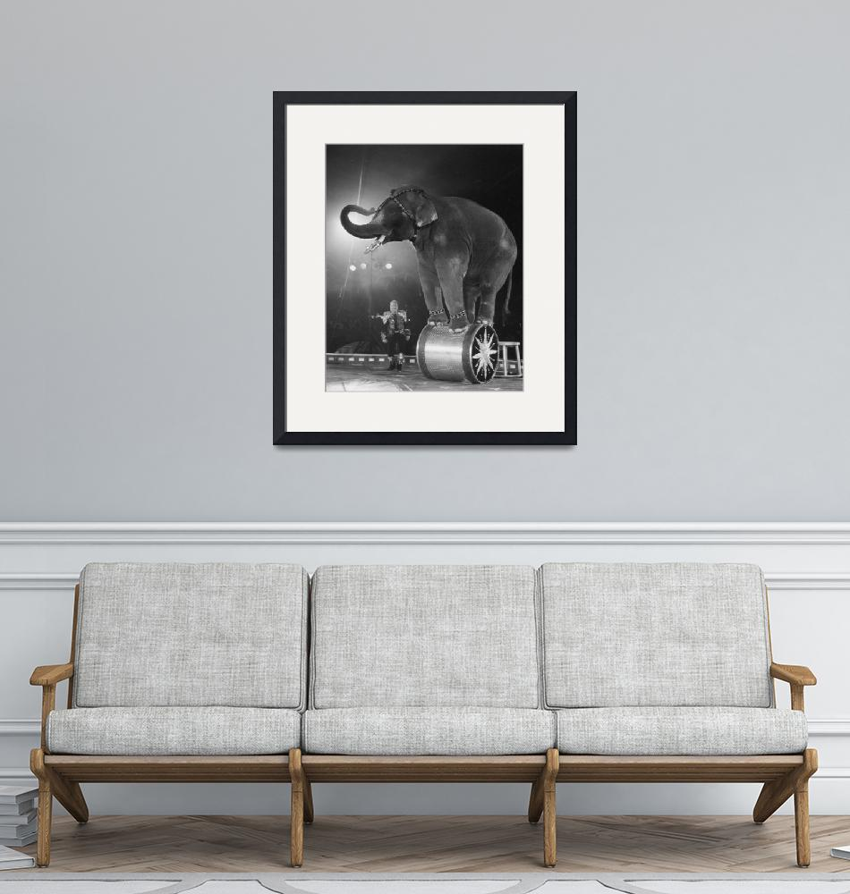 """""""Circus Elephant"""" by RetroImagesArchive"""