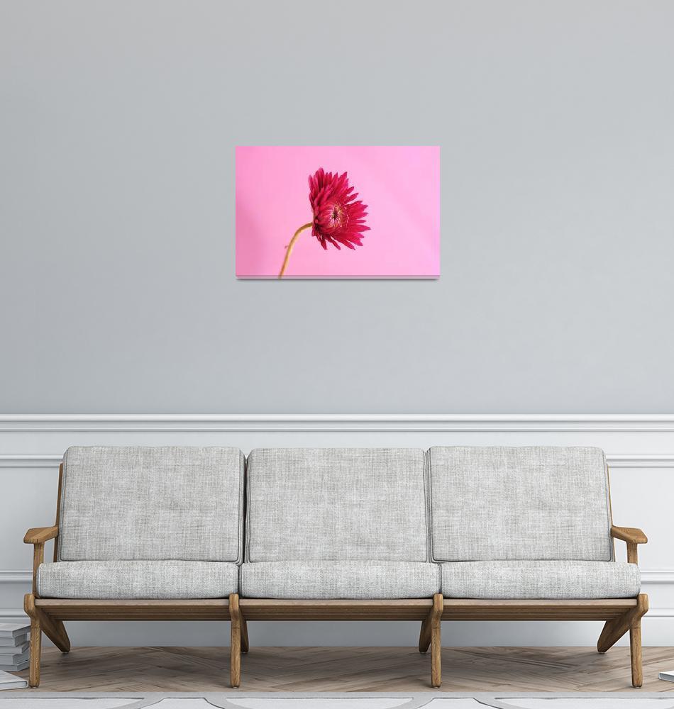"""Single Pink Mum_2356""  (2005) by AmbientCreations"