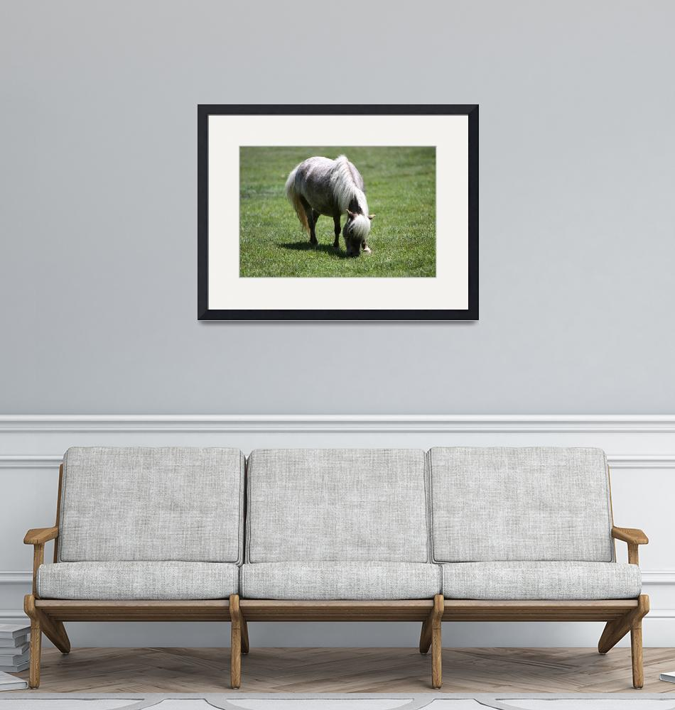 """""""AdultMiniatureHorse_08"""" (2010) by SBCountyImages"""