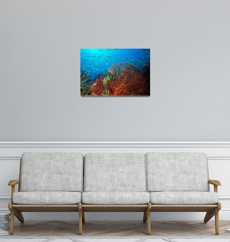 """""""Solomons reef scene""""  by Triggerfish_Images"""