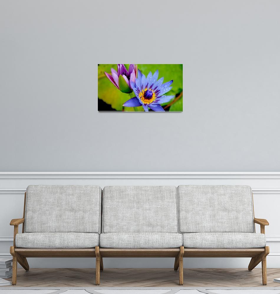 """""""Lavender and Periwinkle""""  (2011) by MoonLiteStudio"""