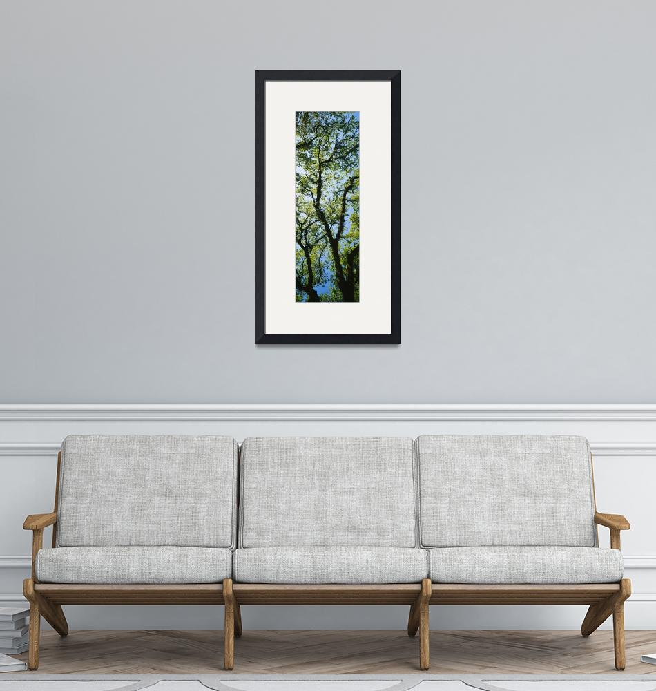 """""""Live Oak Tree with Spanish Moss GA""""  by Panoramic_Images"""