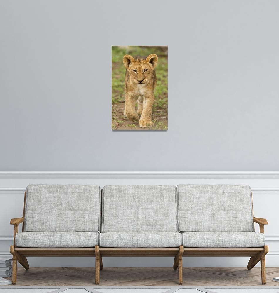 """Africa Animal Framed Photo""  by buddakats1"