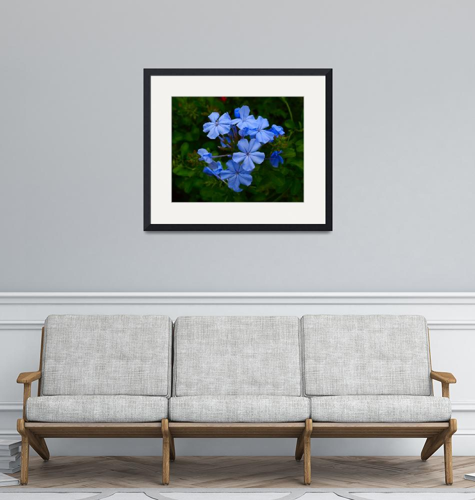 """""""Blue Flowers 8X10""""  (2008) by brianyoung81"""