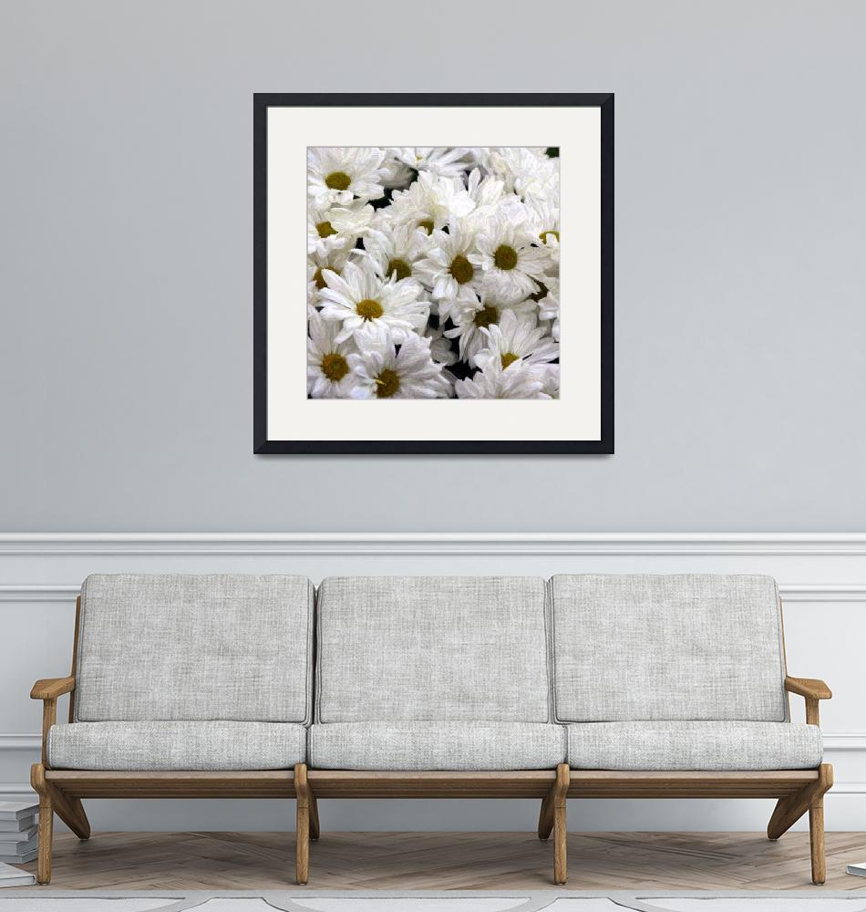 """""""Daisies""""  (2009) by IMAGESDEZIGNS"""