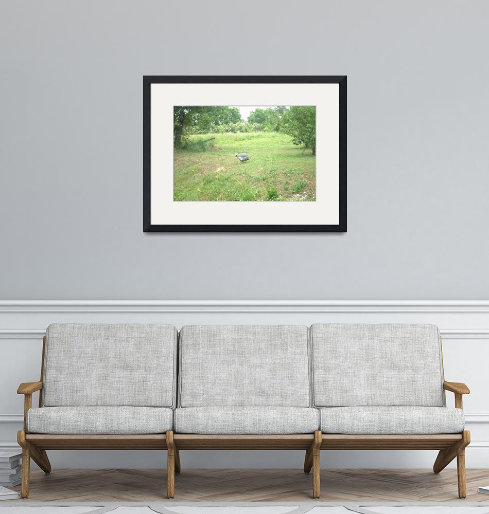 """""""Guinea in the field""""  (2016) by gilbertsphotographyprints"""