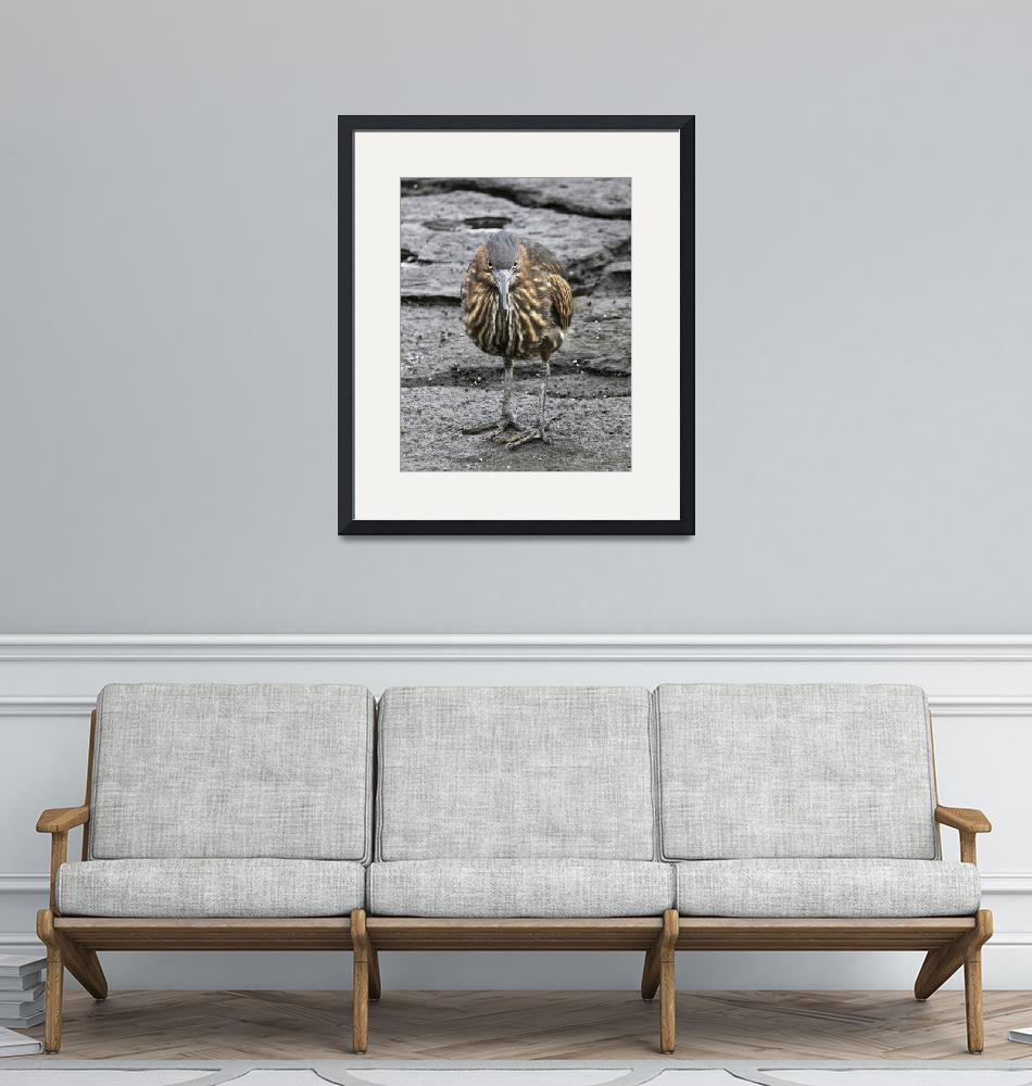 """""""Heron watches""""  (2007) by awsheffield"""