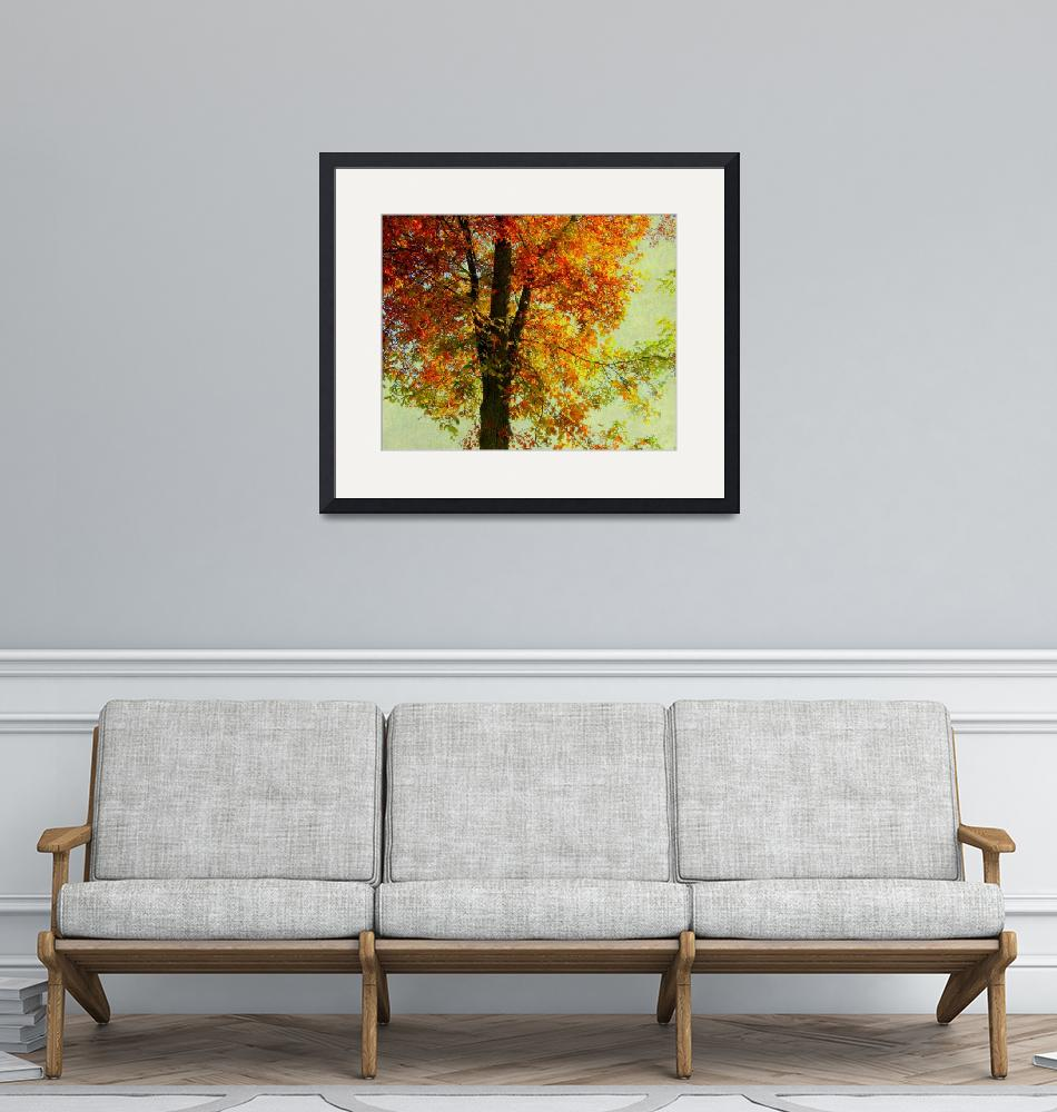 """""""OCTOBER 20 2010 FOOGY TREES AUTUMN37-2""""  by manymuses"""