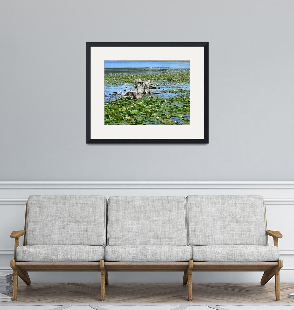 """""""Water Lilies""""  by AlanWard"""