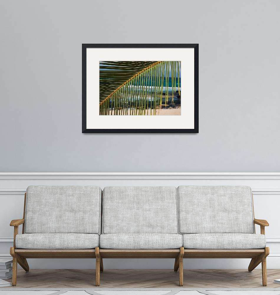 """""""Looking through a palm leaf in paradise""""  (2010) by Jsquaredphotoandart"""
