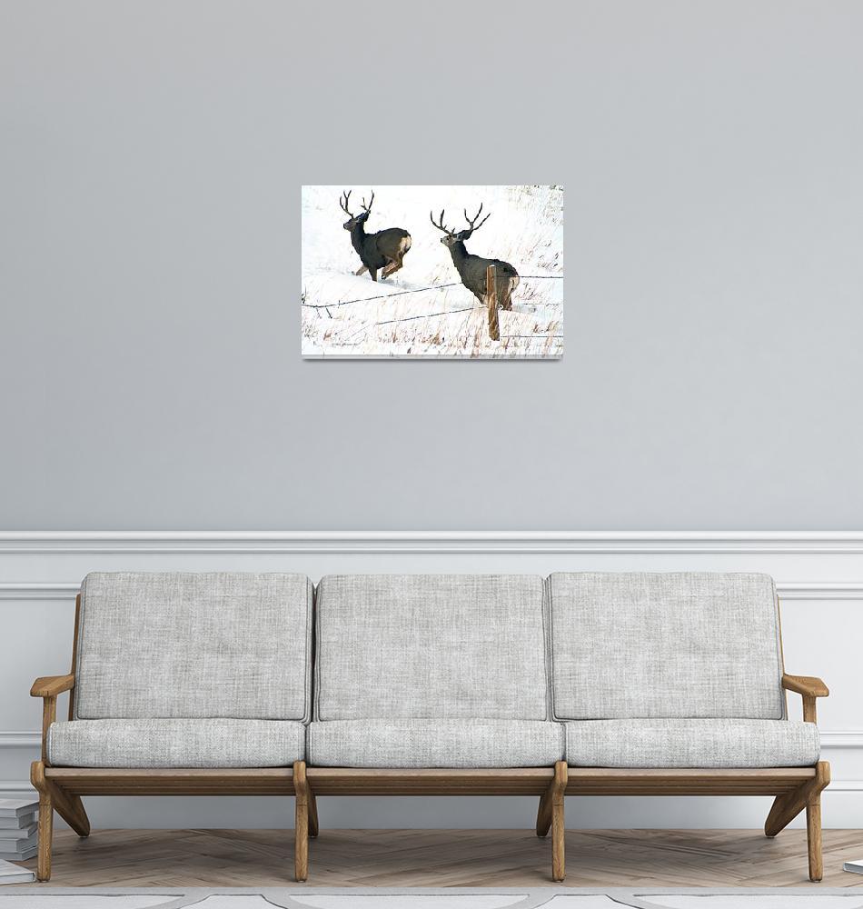 """""""Two Running Buck Mule Deer""""  (2012) by SamSherman"""