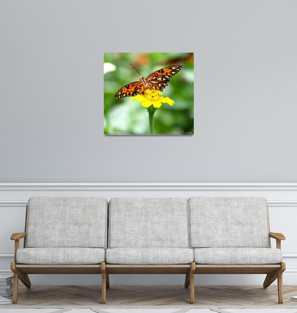 """""""Gulf Fritillary Butterfly""""  (2012) by WildAboutNaturePhotography"""