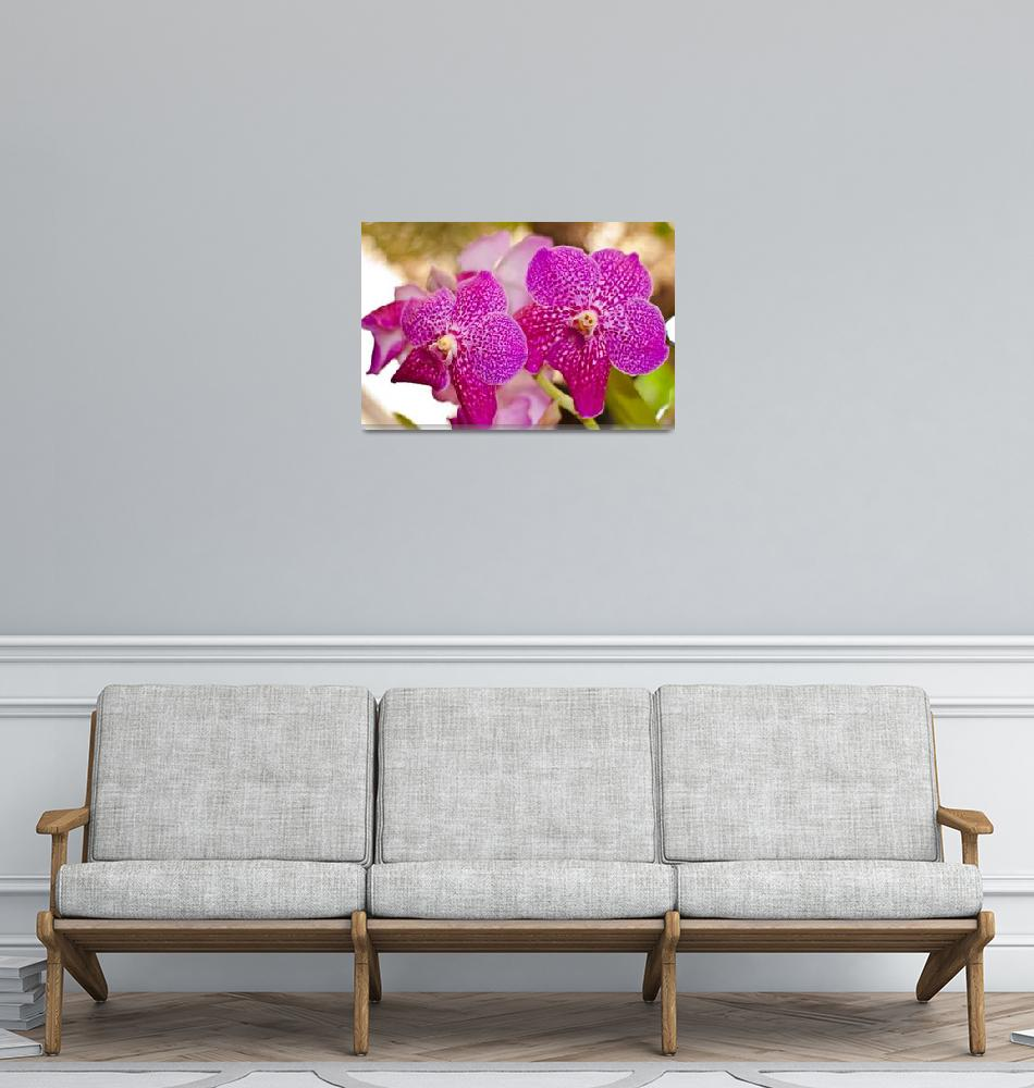 """Madeira Orchids 6""  (2009) by JoaoFialho"