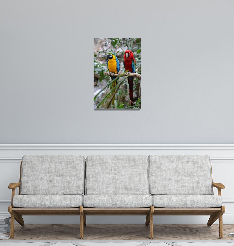"""""""Macaws""""  (2013) by walbyent"""