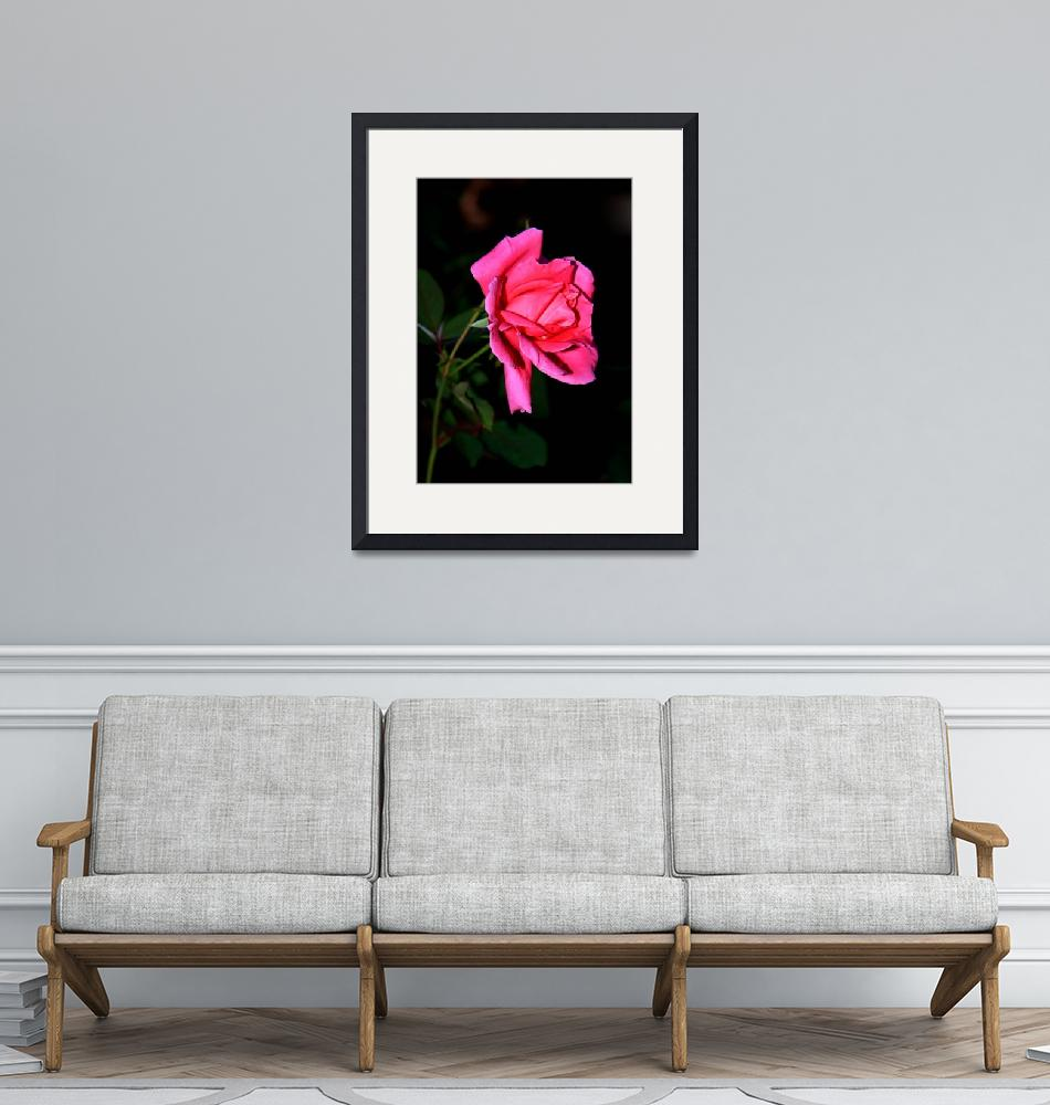 """""""Bright Rose 0173""""  (2009) by rayjacque"""