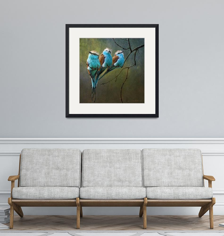 """""""racquet tailed rollers blue birds of africa""""  (2011) by rchristophervest"""