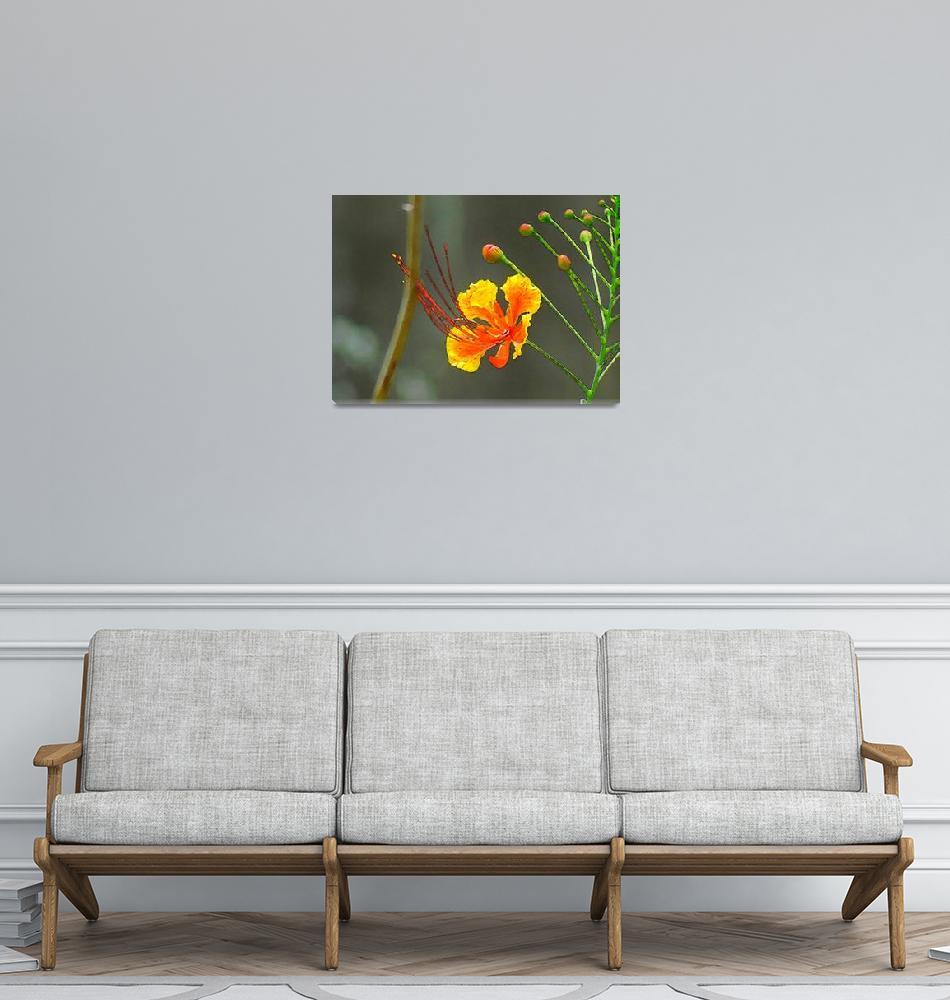 """A Tropical Flower""  (2010) by Caribbean-Digital-Art"