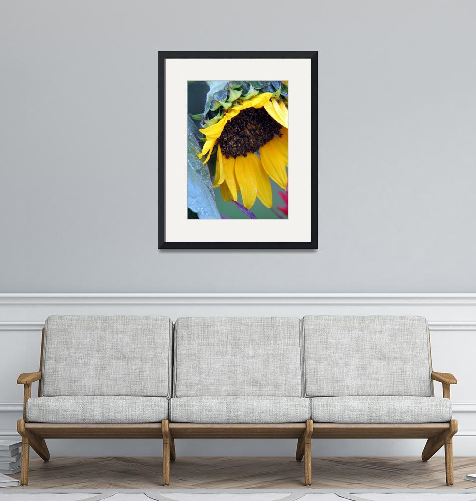 """Sunflower"" (2009) by LjTaft"