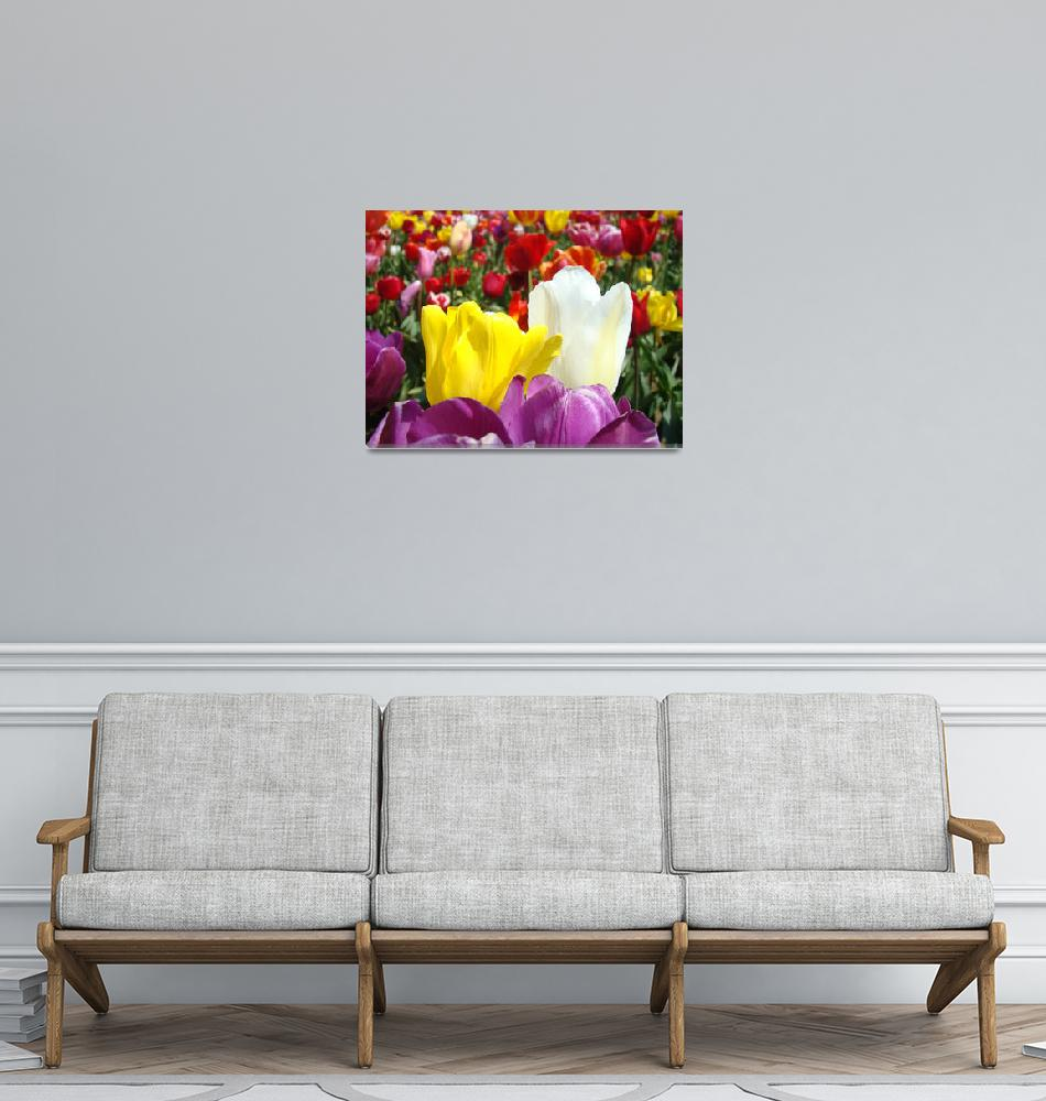 """Office art prints Colorful Tulip Flowers Garden""  (2011) by BasleeTroutman"